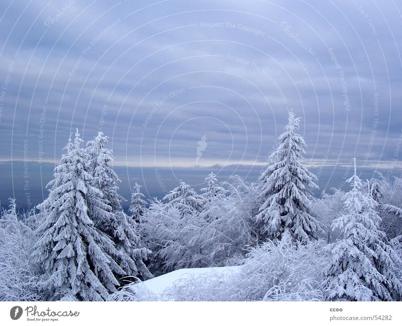 Inselsberg Himmel Baum Winter Schnee Berge u. Gebirge Tanne Gipfel