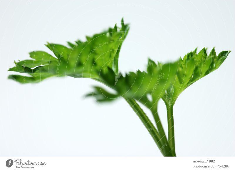 Grün grün Pflanze Blatt Gesundheit Lebensmittel frisch ästhetisch Kochen & Garen & Backen Kräuter & Gewürze lecker Vitamin Freisteller Vegetarische Ernährung Petersilie Beilage