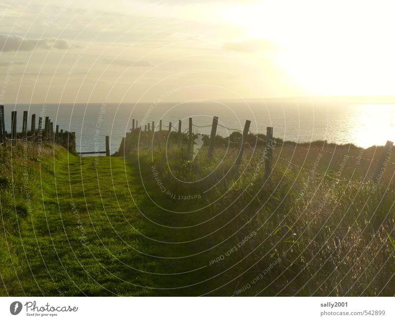 Traumpfad... Natur Sommer Meer Erholung Einsamkeit Wiese Wege & Pfade Gras Küste natürlich Horizont träumen Stimmung Feld wandern Schönes Wetter