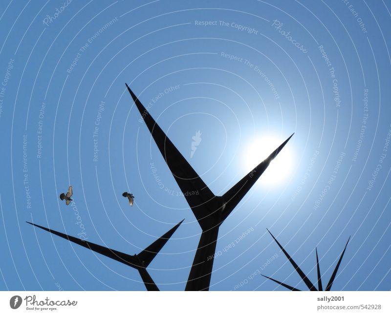 Kunstflug Kunstwerk Skulptur Wolkenloser Himmel Sonne Sonnenlicht Schönes Wetter Vogel Taube 2 Tier fliegen leuchten ästhetisch außergewöhnlich eckig gigantisch