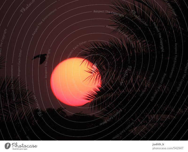 Delhi Sunset II Ferien & Urlaub & Reisen Freiheit Sommer Sonne Natur Landschaft Pflanze Tier Luft Himmel Sonnenaufgang Sonnenuntergang Sonnenlicht