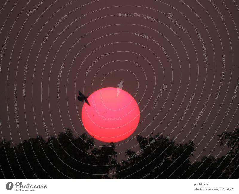 Delhi Sunset I Ferien & Urlaub & Reisen Sonne Natur Landschaft Himmel Nachthimmel Sonnenaufgang Sonnenuntergang Park Vogel Taube 1 Tier fliegen Gefühle Stimmung