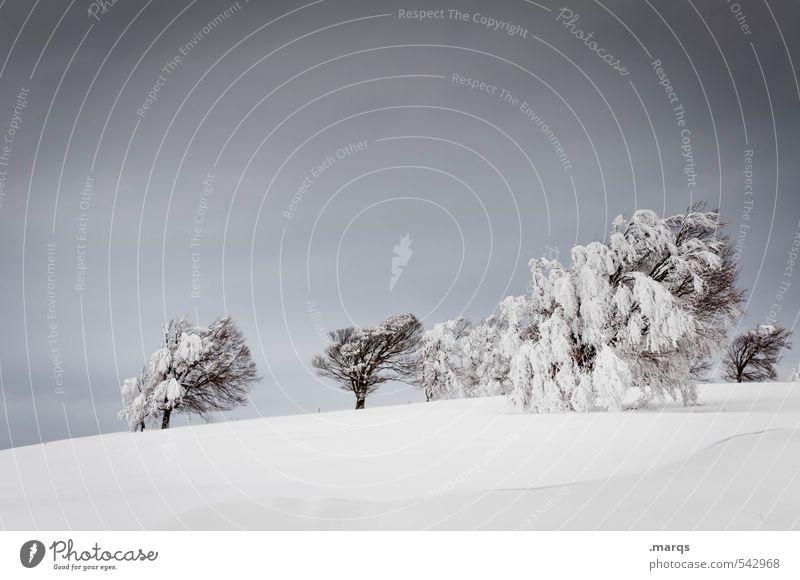 Windschief Himmel Natur Ferien & Urlaub & Reisen weiß Baum Landschaft Wolken Winter kalt Umwelt grau Stimmung Eis Klima Ausflug Abenteuer