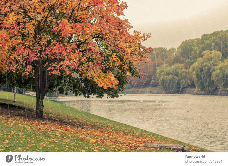 buntibunt Natur schön Farbe Pflanze Baum Blatt Freude Wiese Senior Herbst Küste Park Kraft Fröhlichkeit einzigartig Freundlichkeit