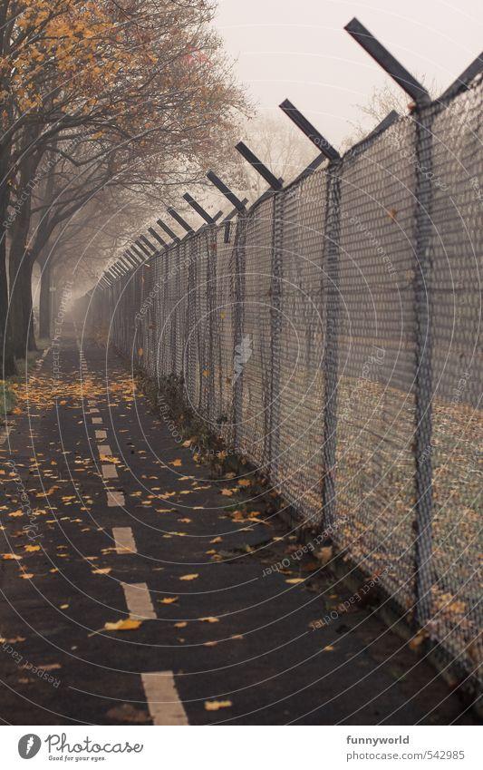 nur ein Weg Pflanze Himmel Herbst schlechtes Wetter Baum Blatt Park Stadt Stadtrand Menschenleer Zaun Metall alt Traurigkeit verblüht dunkel eckig groß