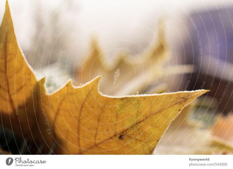 Herbst - ne, schon Winter! Einsamkeit Blatt kalt Eis ästhetisch Spitze Frost Sehnsucht Schmerz Herbstlaub welk Eisblumen Licht