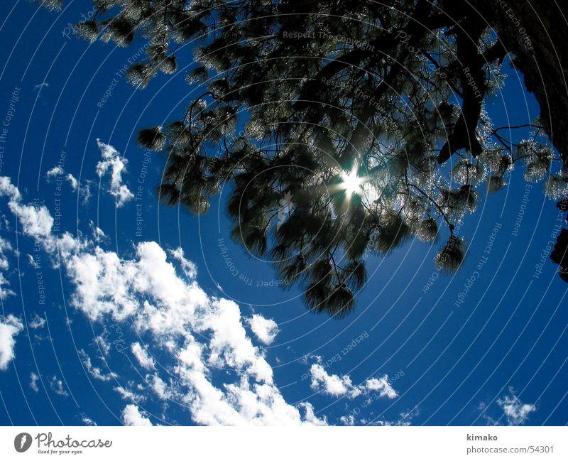 Sunlight Himmel Baum Sonne blau Wolken