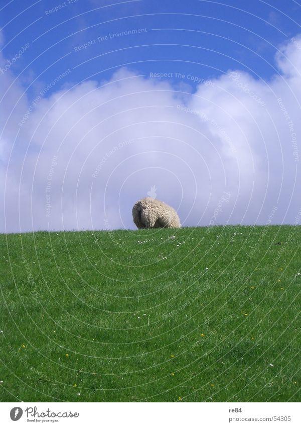 Wolle Petry - solo Himmel blau grün Farbe weiß Erholung Meer rot ruhig Wolken Wiese grau See braun Wind Turm