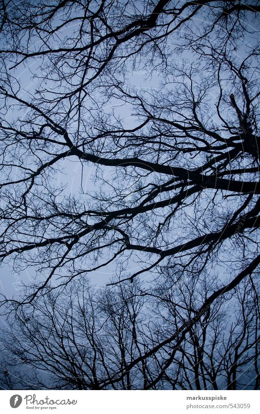 verästelung Himmel Natur alt Pflanze Baum Landschaft Blatt Tier Winter Umwelt Herbst Garten Park bedrohlich Ast Wolkenloser Himmel