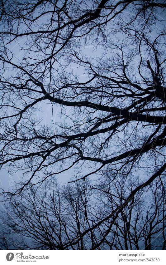 verästelung Umwelt Natur Landschaft Pflanze Tier Himmel Wolkenloser Himmel Herbst Winter Baum Blatt Nutzpflanze Baumstamm Ast Blattadern Garten Park atmen
