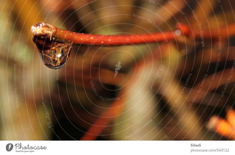 Regen Wasser Wassertropfen Wetter schlechtes Wetter Pflanze Zweig Ast braun gelb gold grün rot Leichtigkeit Farbfoto Außenaufnahme Tag Unschärfe