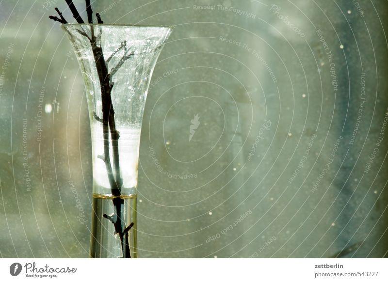 Vase Blumenvase Häusliches Leben Innenarchitektur Glas Fensterscheibe Scheibe Glasscheibe grau Textfreiraum durchsichtig Stengel Zweig Wasser