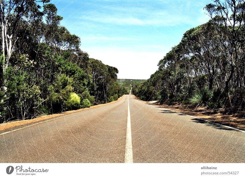 Straße auf Kangaroo Island Australien Känguru-Insel Horizont Eukalyptusbaum Ferien & Urlaub & Reisen Ferne bush Freiheit außenaufname Landschaft