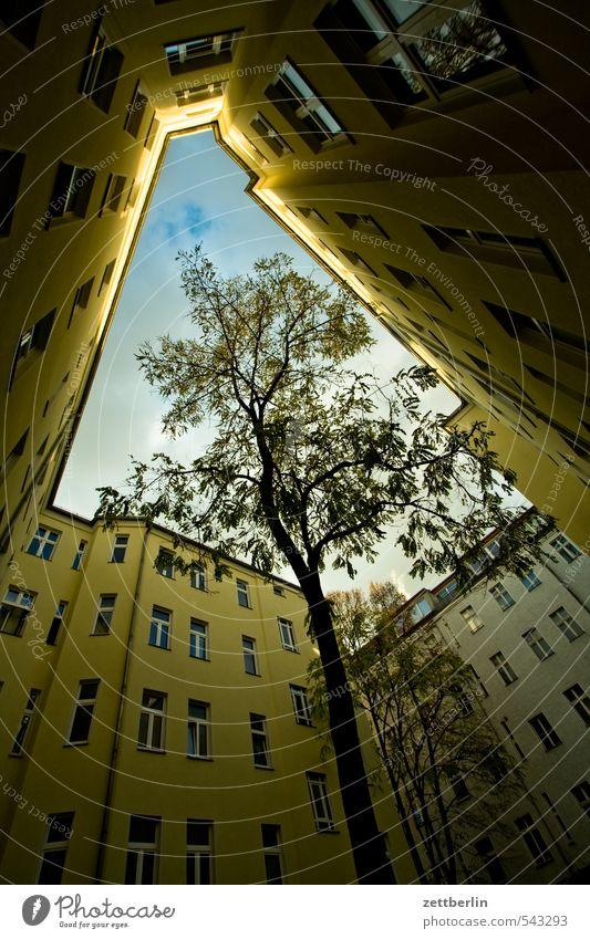 Innenhoch Himmel grün Pflanze Baum Wolken Fenster Herbst Berlin Häusliches Leben Perspektive Sehnsucht Baumstamm eng Hinterhof Plattenbau Mieter
