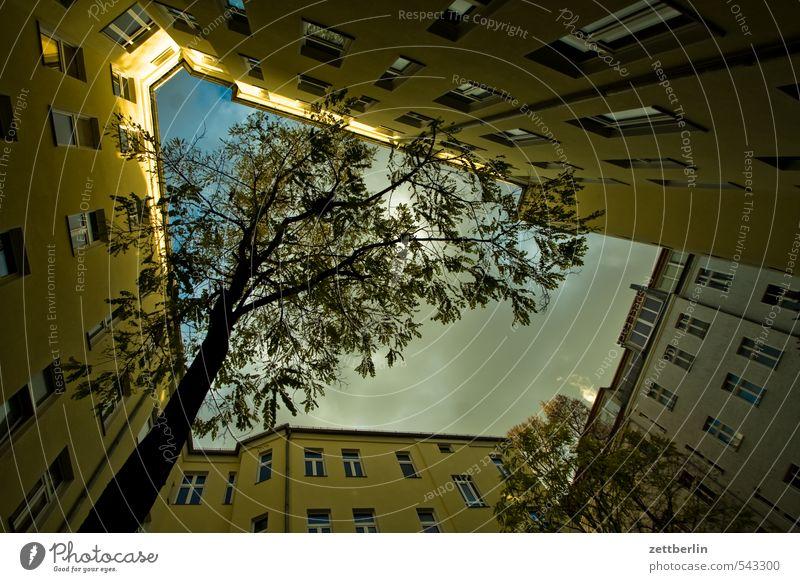Innenbaum grün Pflanze Baum Wolken Fenster Herbst Berlin Häusliches Leben Perspektive Sehnsucht Baumstamm eng Hinterhof Plattenbau Mieter Innenhof