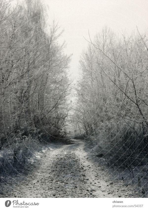 allee weiß Baum Winter Wald dunkel kalt Schnee Traurigkeit Wege & Pfade Nebel Allee Gasse unbequem