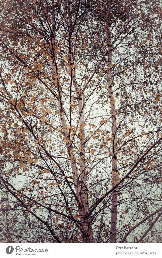 bereza Umwelt Natur Landschaft Pflanze Himmel Sonne Sonnenlicht Herbst Klima Wetter Baum Blatt Garten Park Wald Holz leuchten ästhetisch schön gelb orange weiß