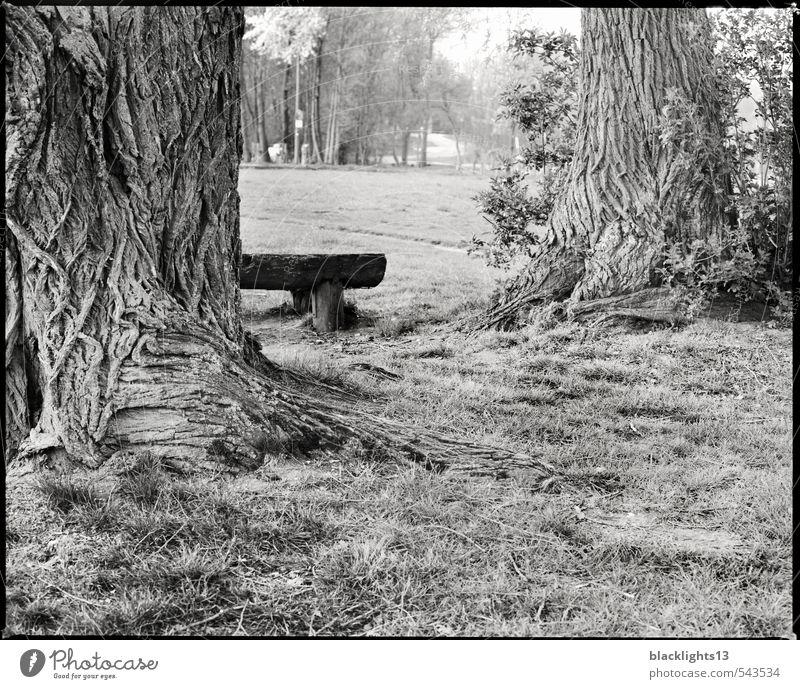 Die Auszeit im Park Freude Wohlgefühl Erholung ruhig Abenteuer Freiheit wandern Spaziergang Kunst Natur Landschaft Baum Gras Baumstamm Wiese alt ästhetisch frei