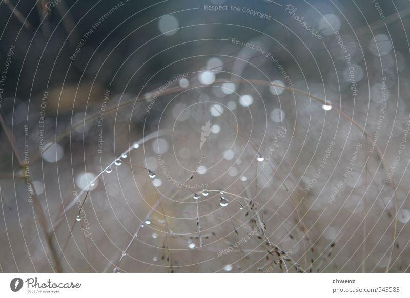 Raindrops Natur Pflanze Wassertropfen Herbst Winter Wetter Schönes Wetter schlechtes Wetter Regen Eis Frost Gras Wildpflanze Wiese frieren träumen Traurigkeit