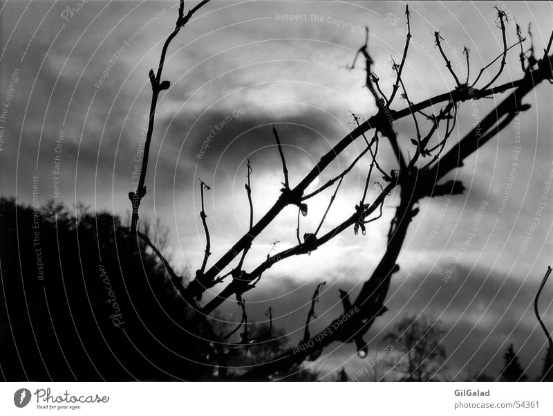 Die Sonne hat sich versteckt dunkel schlechtes Wetter Sträucher Baum schwarz weiß Wolken Apokalypse Himmel gestrüp Schwarzweißfoto verstecken