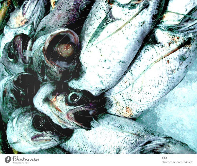 frische Fische Barcelona Auge Zunge Schwimmhilfe blau Wasser Eis Markt