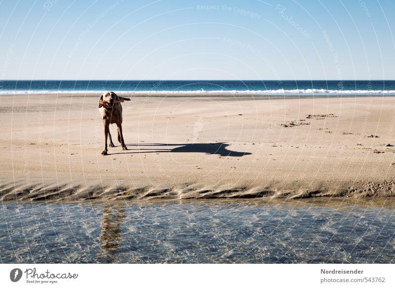 Meine Insel Jagd Abenteuer Ferne Freiheit Sommer Sonne Strand Meer Wellen Landschaft Urelemente Sand Wasser Wolkenloser Himmel Tier Hund Spielen Freundlichkeit