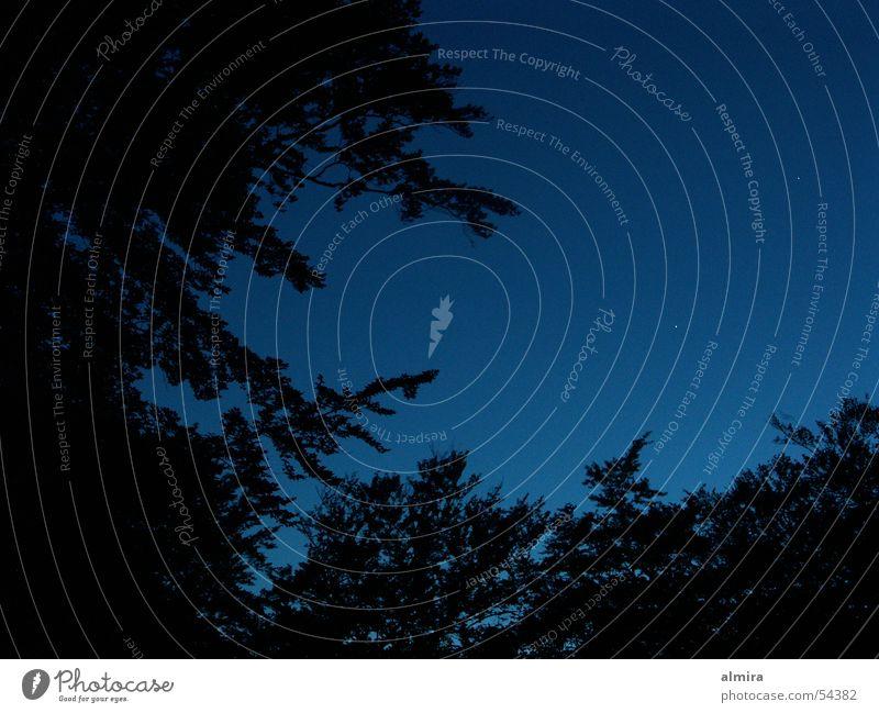 sternenhimmel Himmel blau ruhig schwarz Wald dunkel warten schlafen tief Buche