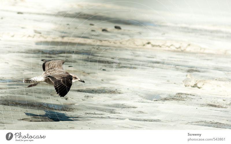 Tiefflieger ahoi! Natur Pflanze Sommer Tier Strand Küste Sand Vogel Kraft Wildtier Insel ästhetisch Flügel Nordsee Tapferkeit Norderney