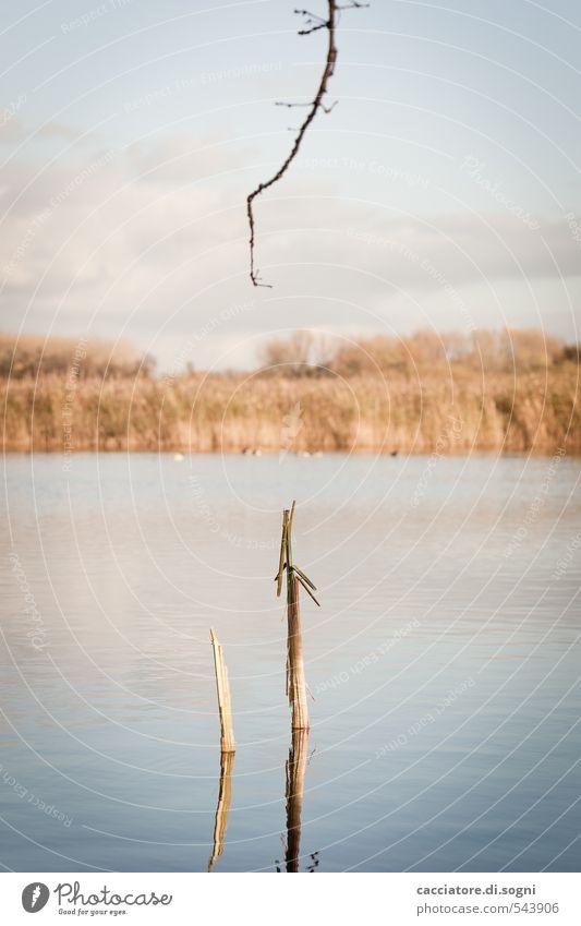 Am See Natur Landschaft Wasser Himmel Herbst Schönes Wetter Pflanze Zweig Seeufer Teich Linie dünn einfach lang lustig natürlich blau braun ruhig Neugier
