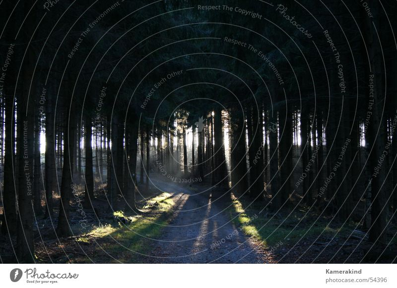 Herbstwaldlicht Sonne Ferne Wald dunkel Wege & Pfade Wärme hell nah Ziel Physik Fußweg Momentaufnahme grell Holzmehl Holzhaus