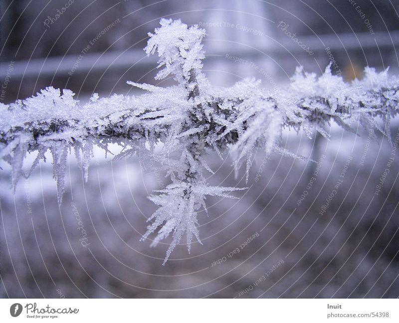 Stachel-Draht Winter kalt Schnee Eis Frost Kristallstrukturen Stacheldraht