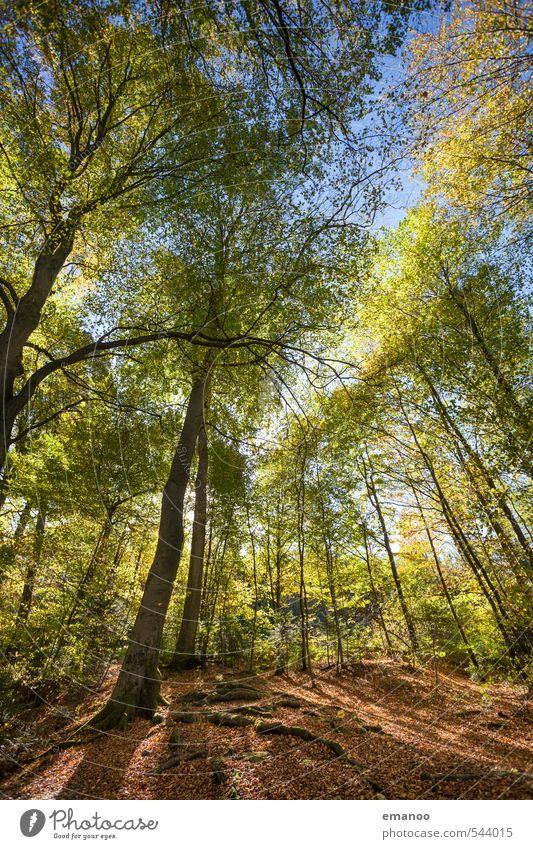 Die Geschichte vom Herbst Himmel Natur Ferien & Urlaub & Reisen blau grün Pflanze Baum Landschaft Blatt Wald Umwelt Wärme hell braun Wetter