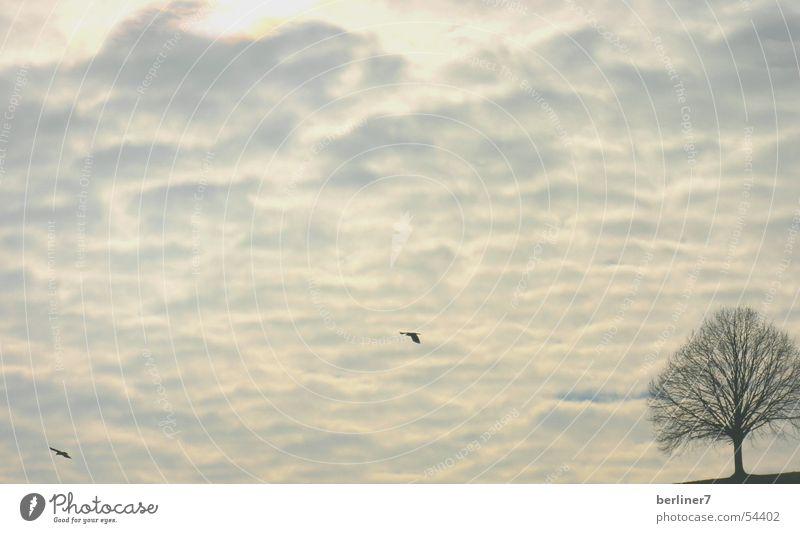 Zwei Vögel und ein Baum Himmel blau Winter Wolken grau Vogel blau-grau