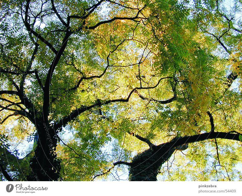 baum Baum Blatt ruhig grün Himmel Frieden blau Schatten tree sky leaves foliage silence blue shadow