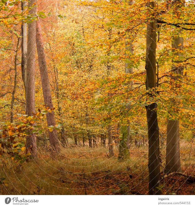 Es herbstelt Ausflug Natur Landschaft Pflanze Erde Herbst Baum Gras Sträucher Blatt Mischwald Waldboden leuchten dehydrieren nachhaltig natürlich braun gelb