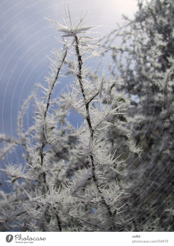 eiskalt erwischt Eiskristall Pflanze Raureif Winter Nebel Schneelandschaft ruhig Kristallstrukturen Frost Freiheit Freude Natur Makroaufnahme