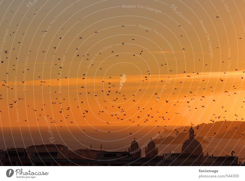 Abendstunde Marseille Hafenstadt frei gelb gold orange schwarz ruhig Idylle Vogelschwarm Abenddämmerung Provence beschaulich Kirchturm Kirchturmspitze