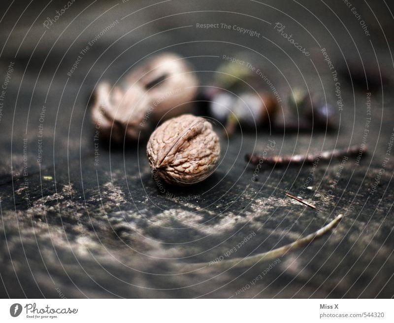 Walnuss Lebensmittel Frucht Ernährung Natur Herbst Baum braun Nussschale Holz Jahresringe Stillleben hart Farbfoto Gedeckte Farben Nahaufnahme