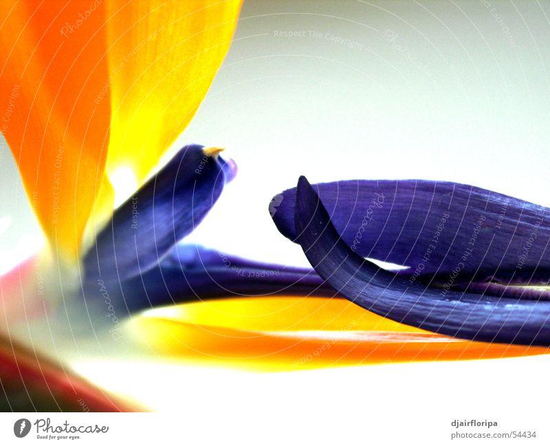 flower Kraft