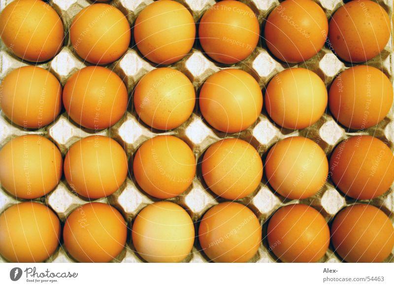 Feld Eier Berge u. Gebirge Vogel orange liegen rund Hügel Reihe Schalen & Schüsseln Haushuhn Nachkommen Embryo