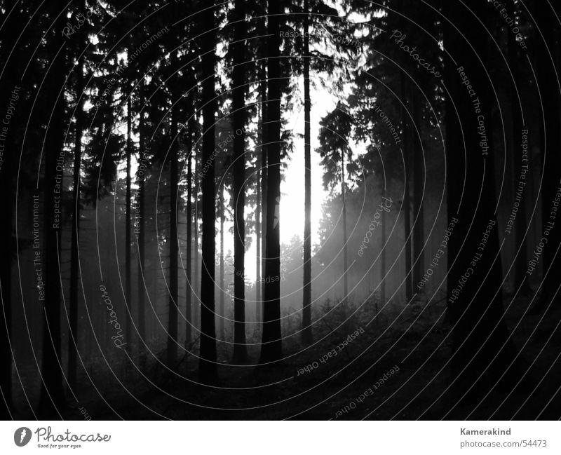 Grauwald schwarz Wald kalt grau Traurigkeit Nebel mystisch Waldlichtung Holzmehl Sauerland Siegerland Rothaargebirge Berg Kindelsberg