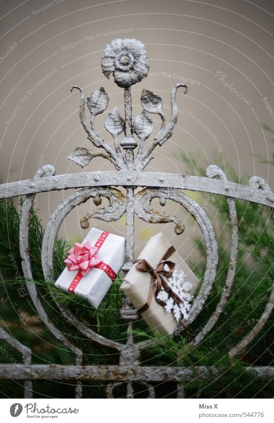 Schenken Weihnachten & Advent Gefühle Feste & Feiern Garten Stimmung Geburtstag Sträucher Geschenk Zaun Weihnachtsbaum verstecken Reichtum Weihnachtsmann