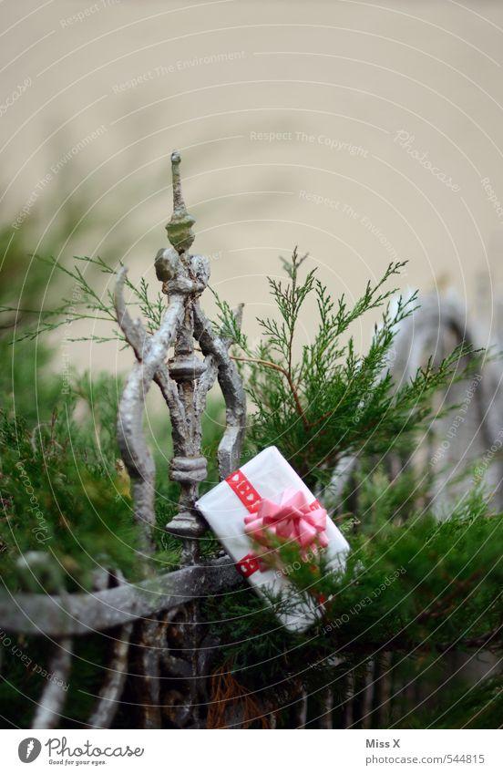 verschenkt Garten Dekoration & Verzierung Valentinstag Weihnachten & Advent Geburtstag Sträucher Verpackung Paket Gefühle Stimmung Vorfreude Liebe Verliebtheit