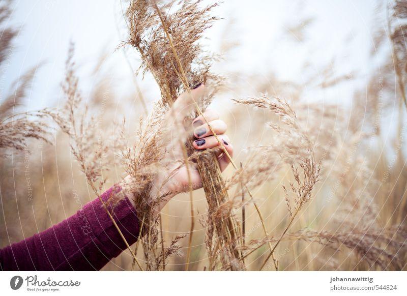 ich bin raus hier – feminin Junge Frau Jugendliche Leben Hand 18-30 Jahre Erwachsene Umwelt Natur Luft Sonnenlicht Herbst Dürre Sträucher Wildpflanze Flussufer