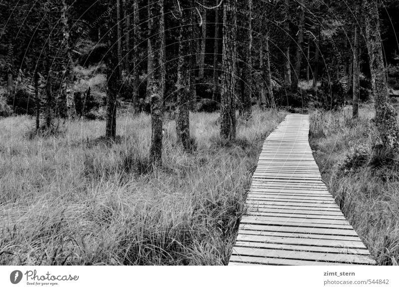 Streif(en) im Wald Gemälde Umwelt Natur Landschaft Pflanze Herbst Baum Gras Sträucher Moor Sumpf Palpuognasee Preda Schweiz Erholung wandern bedrohlich dunkel
