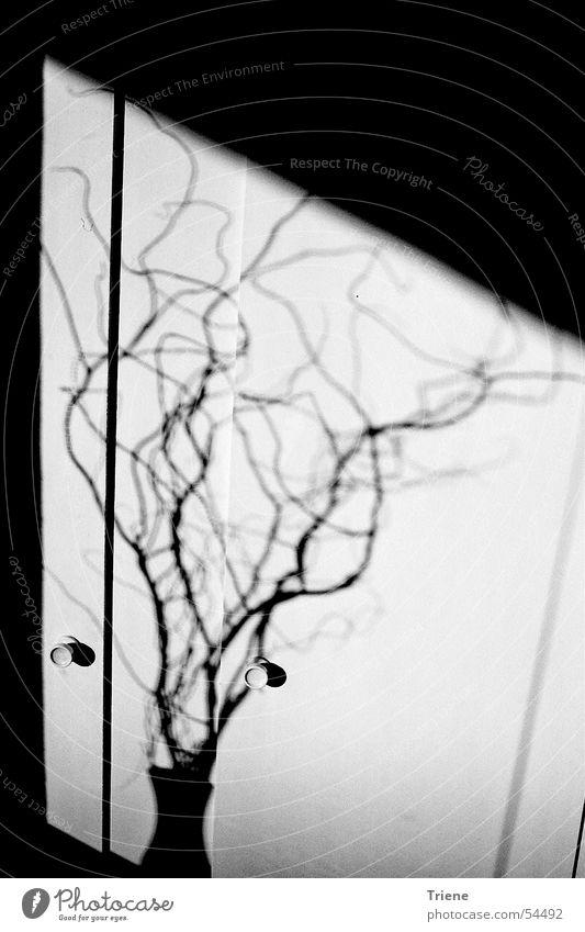 Schatten Sträucher gekrümmt Vase Schwarzweißfoto