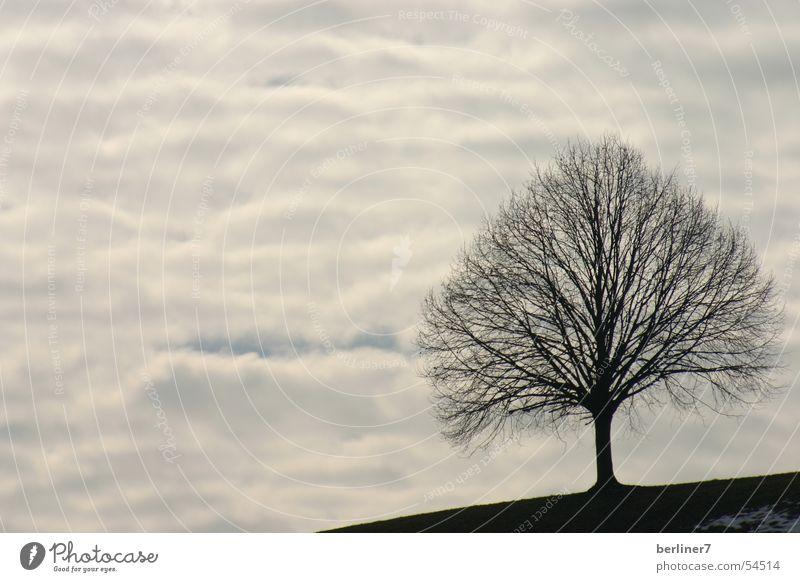 Ein Baum ohne Vögel blau Wolken Berge u. Gebirge grau Vogel Ast blau-grau