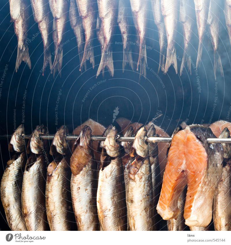 mitgefangen mitgehangen Lebensmittel Fisch Essen Rauch hängen Tod Appetit & Hunger Räucherfisch Fischer Stab geräuchert Außenaufnahme Menschenleer