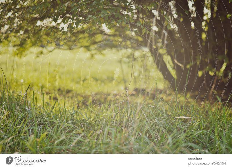 letzte brise sommer Umwelt Natur Landschaft Pflanze Sommer Herbst Klima Schönes Wetter Baum Gras Sträucher Wiese Feld grün Vorsicht Hoffnung Idylle