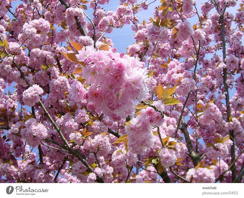 bluetenpracht springen Blüte Frühling Blühend